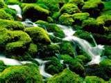 13 - CHIQUI. Dios asociado a las fuentes, es de origen peruano, adoptado en las regiones del noroeste argentino, y que se suele invocar con el objeto de que produzca lluvias en abundancia.